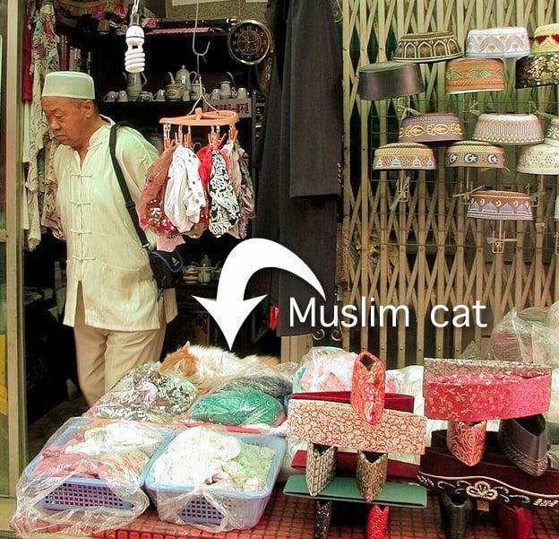 Muslim cat China
