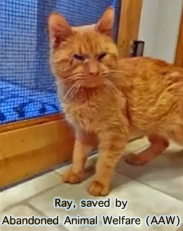Ray - a blinded cat