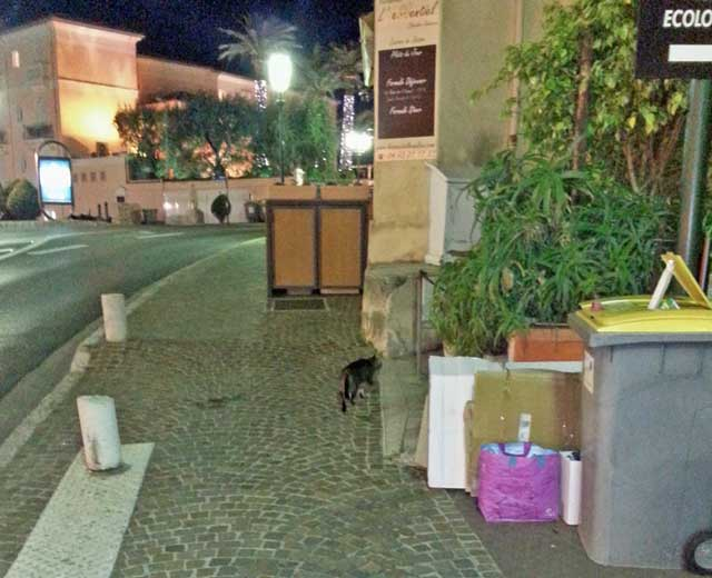 restaurant-cat-outside