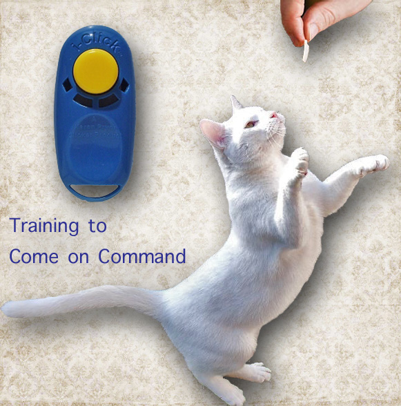 Training cat to come on command
