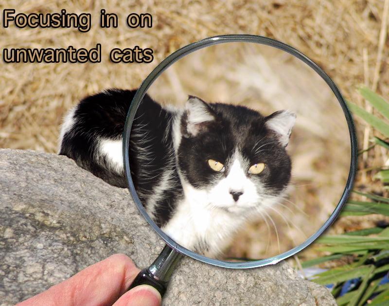 Unwanted Cat