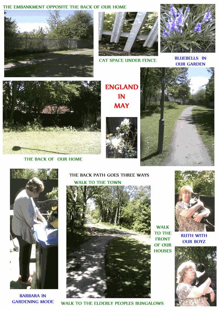 English garden for cats