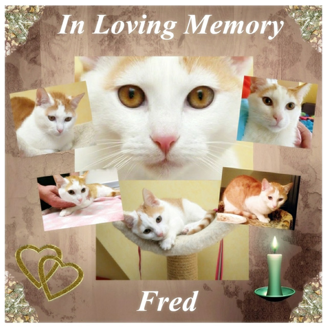In Loving Memory of Fred for PoC article