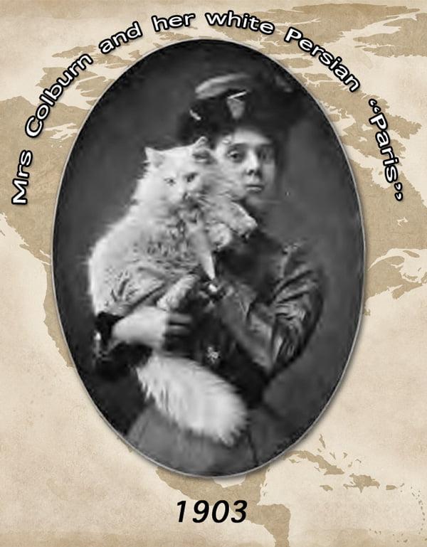 White Persian 1903 America