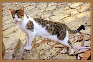 Beautiful stray cat