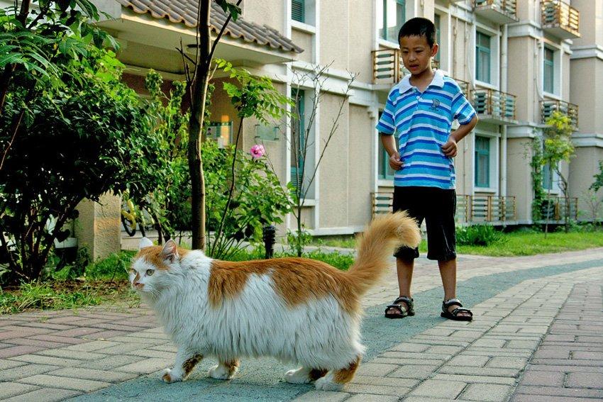 beijing-cat-1