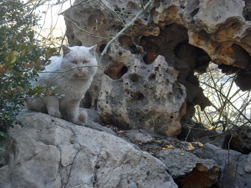 beijing-cat-2