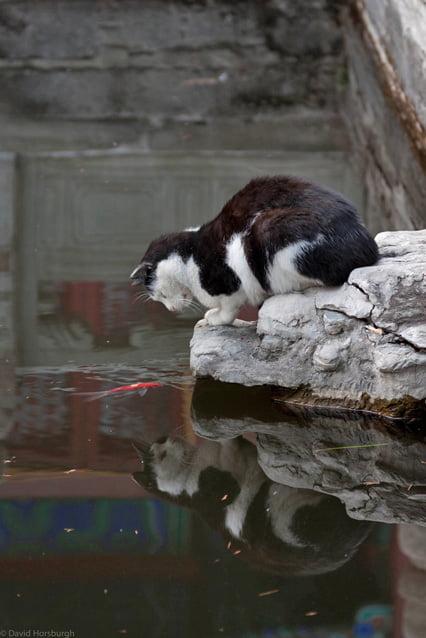 beijing-cat-4