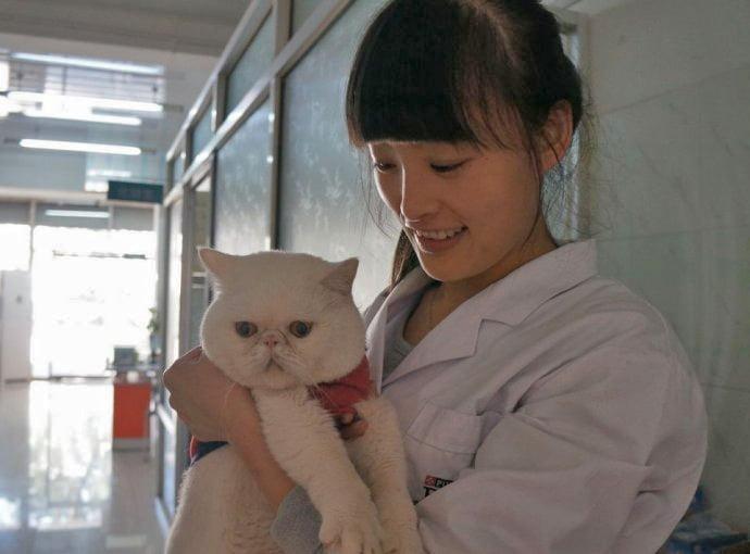 beijing-cat-8