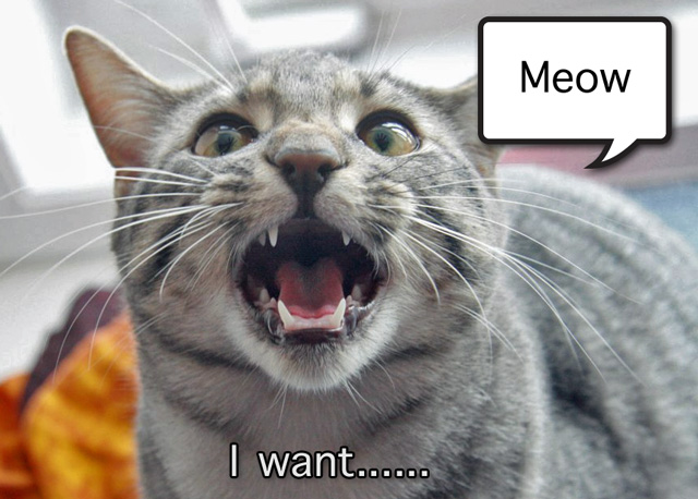 Cat meowing I want