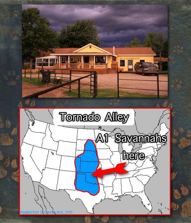 Cats and Tornados