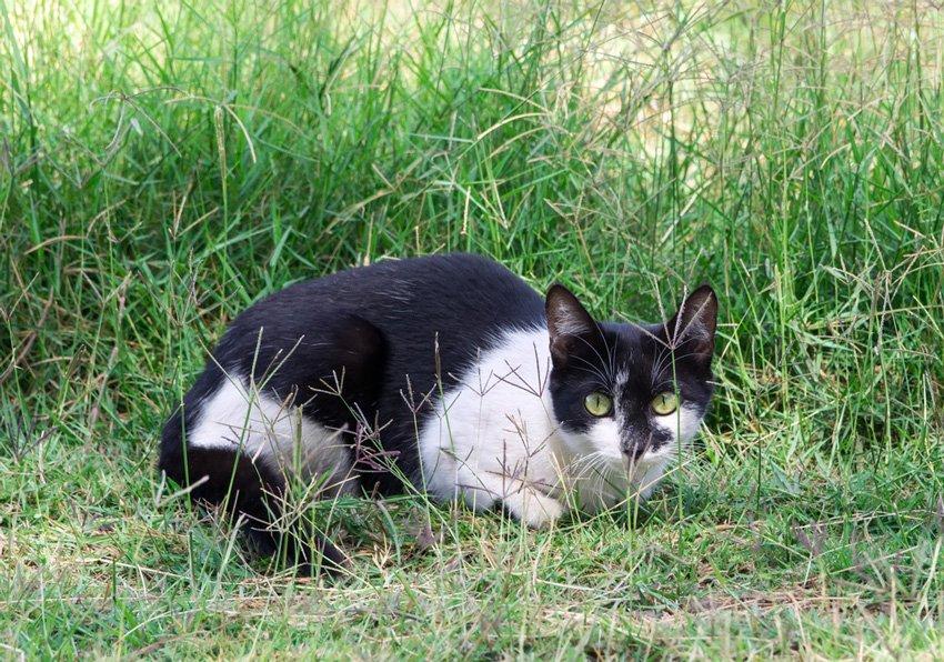 Kenyan Mouser