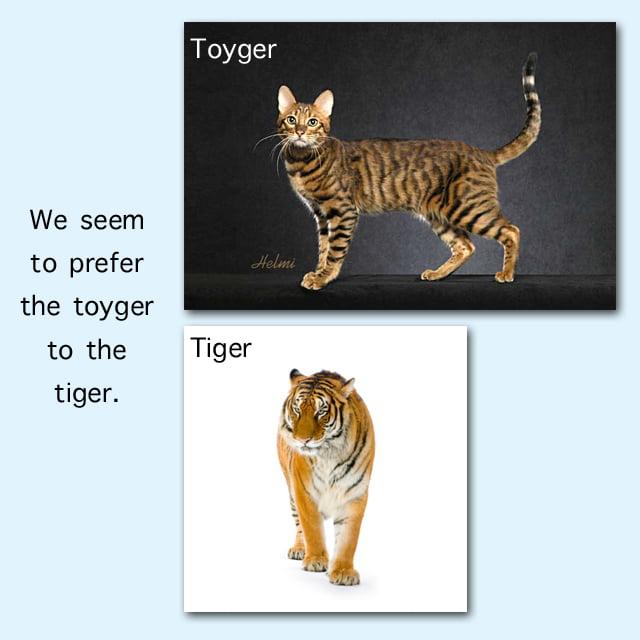 Toyger Tiger