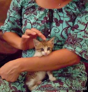 Ugandan kitten