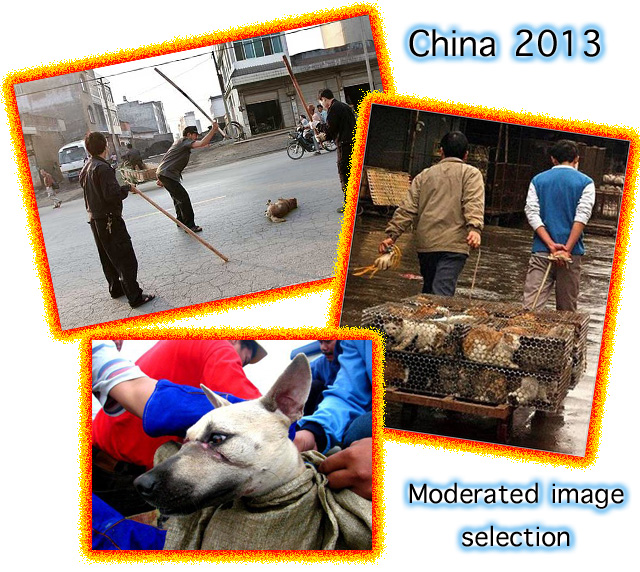 China desperately needs animal welfare laws.