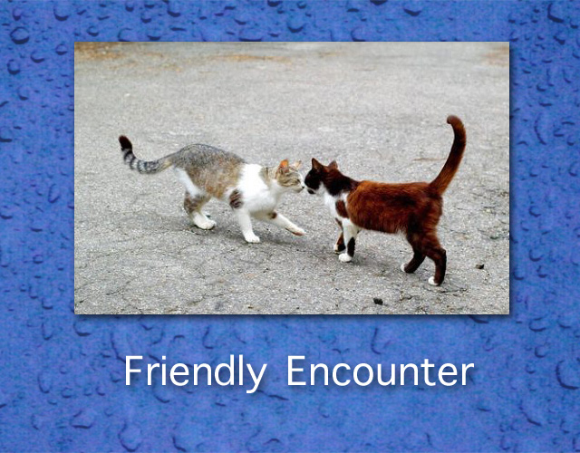 Friendly Cat Encounter
