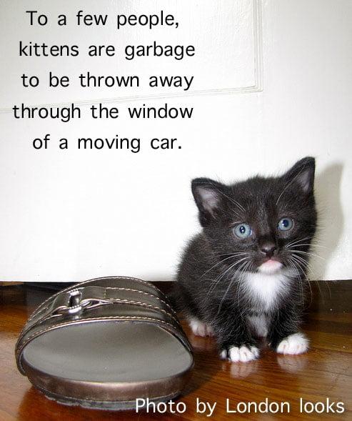 Kitten garbage