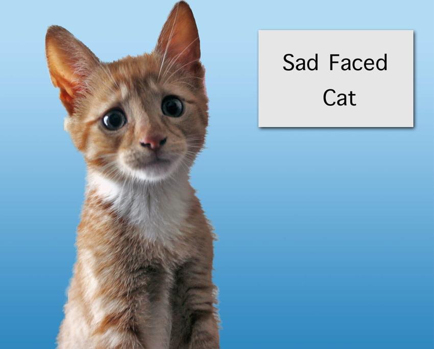 Sad Faced Kitten