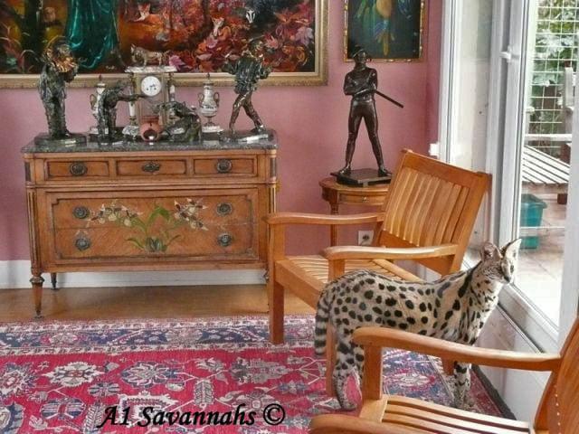 A1-Savannahs-A1-Supremes-Jean-Pierre-Serval-window-m