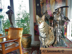 How much do F1 Savannah cats cost?