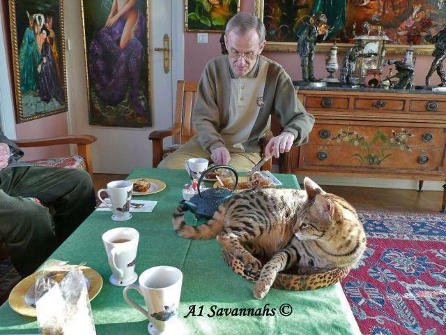 A1-Savannahs-A1-Supremes-Jean-Pierre-tea-time-m