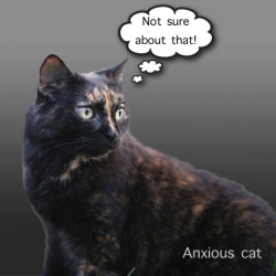 Anxious cat because of shouting