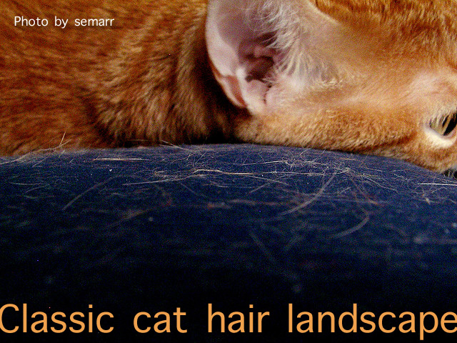 Does cat hair annoy you?