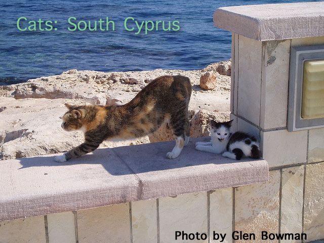 Cats in South Cyprus