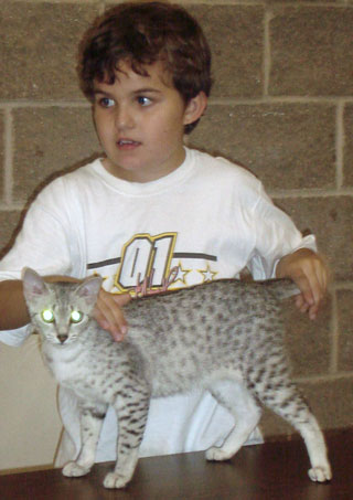 Egyptian Mau and Boy