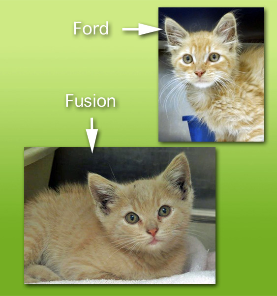 two cats who survived car engine compartments