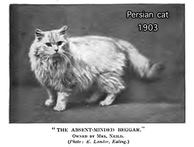 persian5x