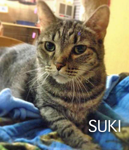 Suki Rescue Cat