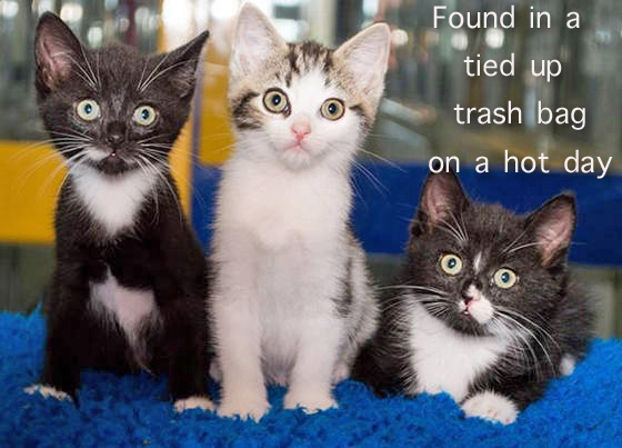 Trash Bag Kittens