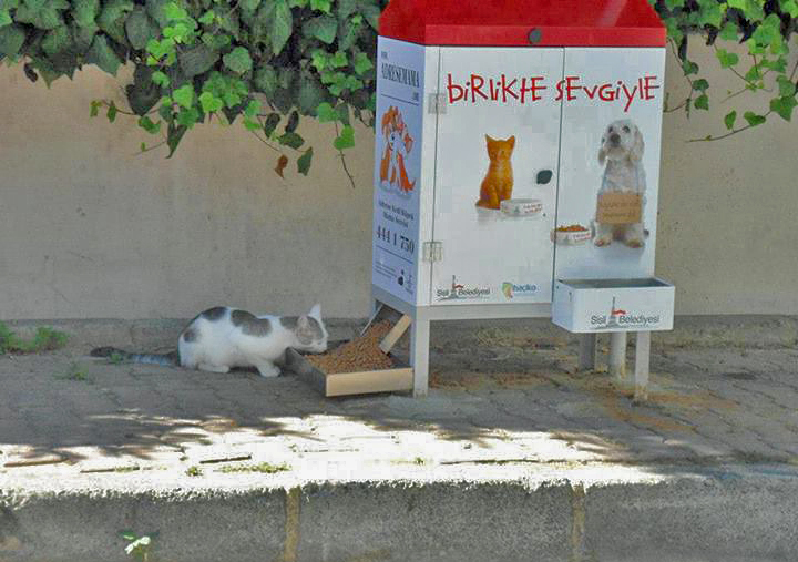 Turkish Stray Cat