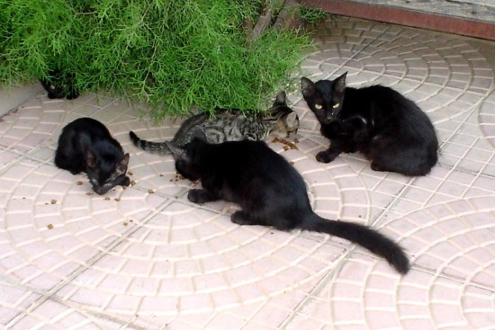 Black cats in Turkey