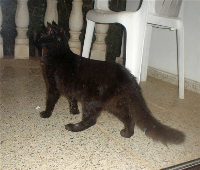 Black cat in Turkey