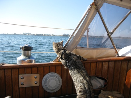 Bengal cat at sea