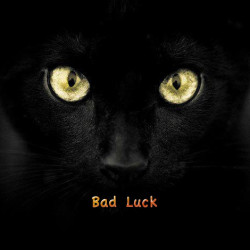 Black cats are bad luck