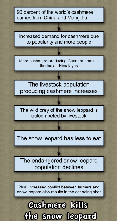 Cashmere kills the snow leopard