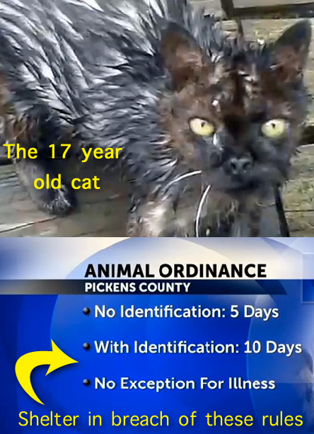 Cat killed by shelter in breach of ordinance