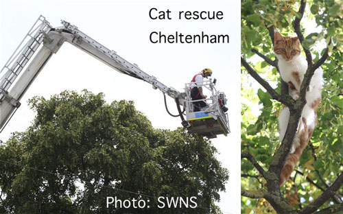 Cat rescued from a tree