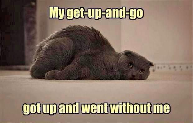 cat-resting
