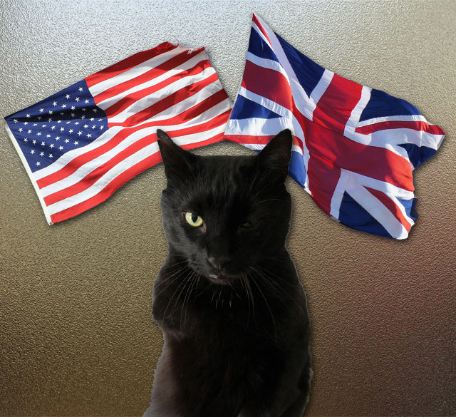 Cultural differences between the USA and the UK and cat caretaking