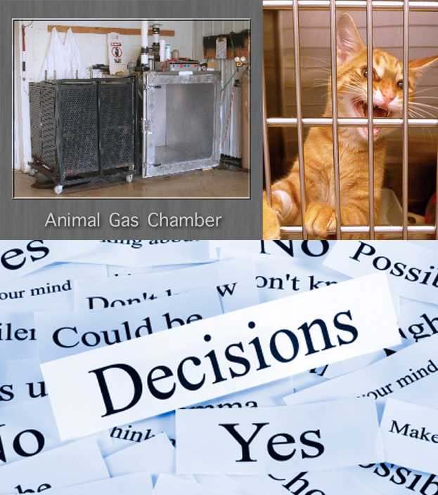 Law about euhanising cats at shelters