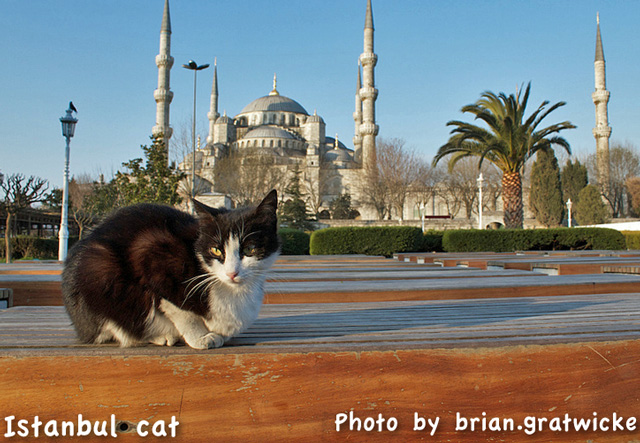Istanbul cat in front of mosque