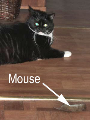 My former lady cat, now deceased, with  mouse.
