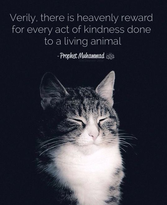 Kindness towards animals