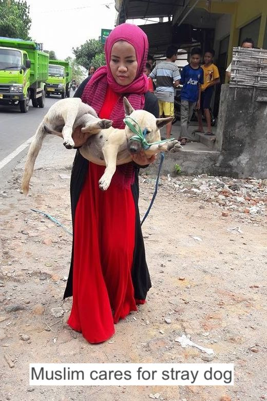 Muslim cares for stray dog
