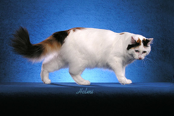 Cat Coats: The Van Pattern – PoC