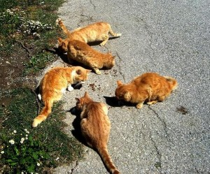 Turkmen Sokak Cat Colony March 2010